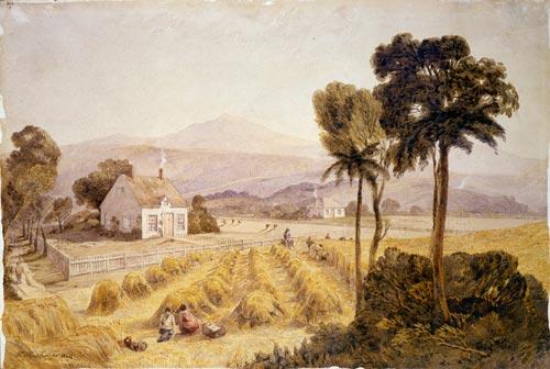 Jollie's farm at Wakapuaka