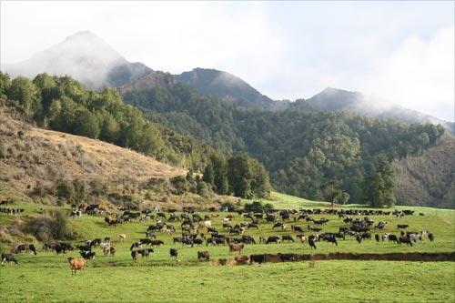 Mātakitaki River valley dairy farm