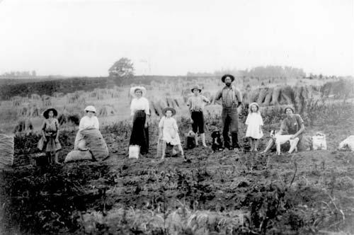 The Langmuir family harvesting potatoes, around 1910