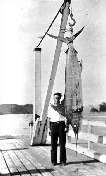 Super-sized swordfish