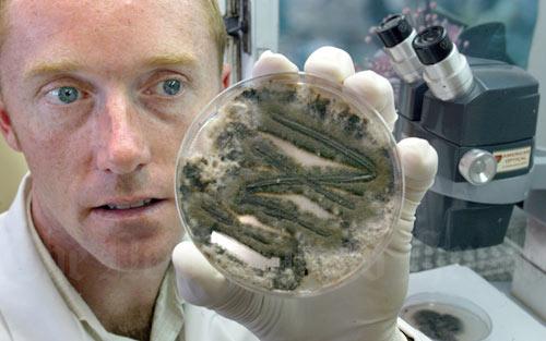 Toxic fungus