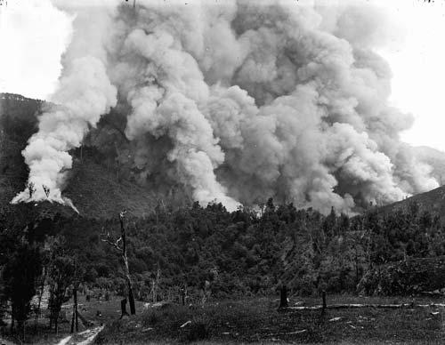 Farming: bush burning