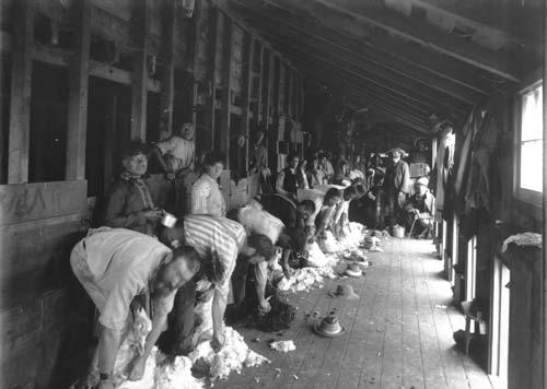 Shearing gang
