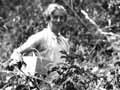 Blackberrying, 1930