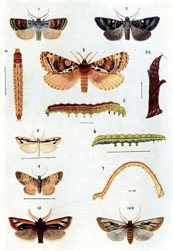 Moth specimens