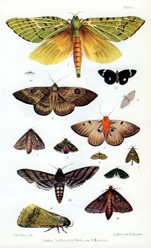 New Zealand moths