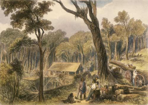 Māori timber workers
