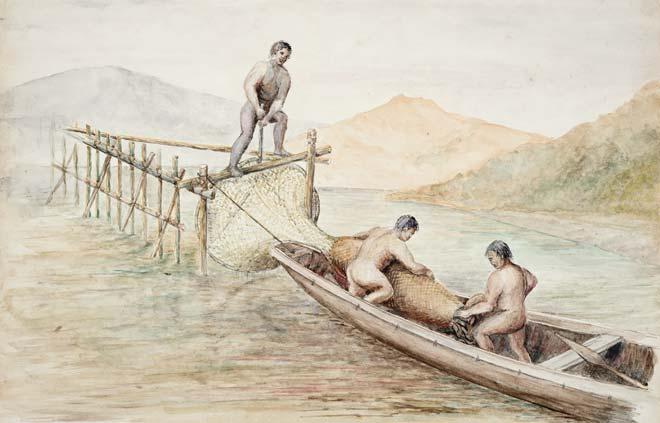 Catching eels