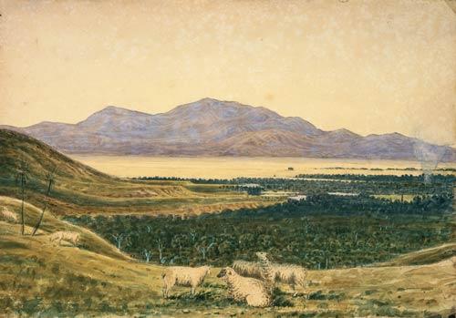 Sheep in the Wairarapa