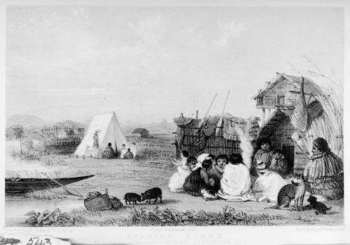 Settlement with kurī