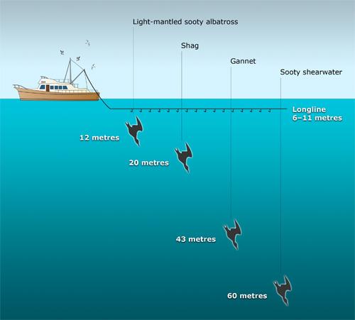 Seabird dive depths