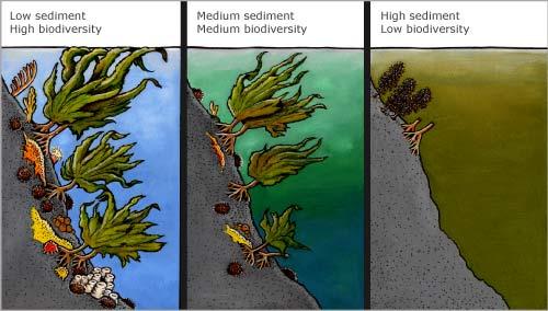 Underwater sediment build-up
