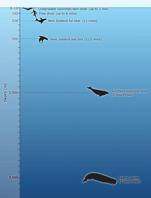 Ocean dive depths