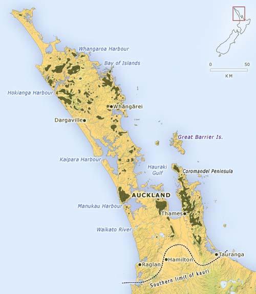 Northland and Coromandel kauri forest, 2006