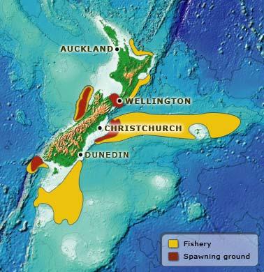 Hoki fisheries and spawning grounds