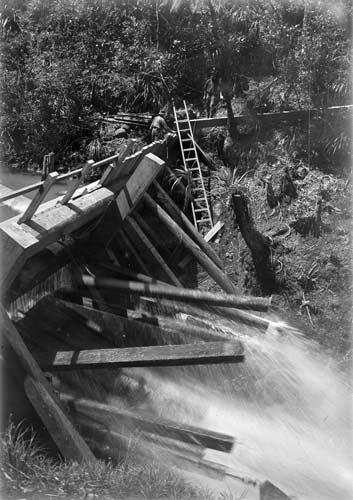 Tripping a kauri dam