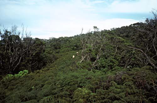 Bracken on hillside