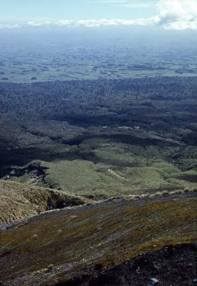 Bands of vegetation, Mt Taranaki
