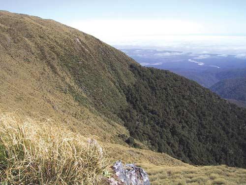 Alpine timberline