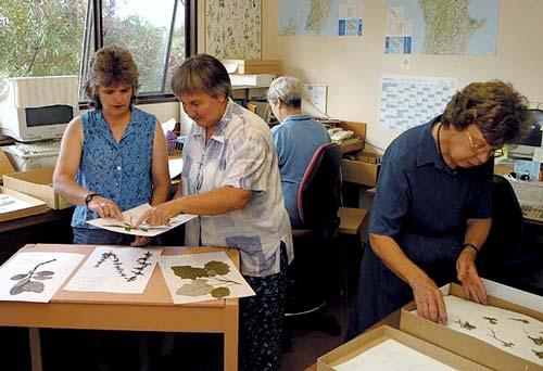 Herbarium researchers