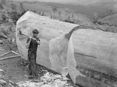 Sniping logs