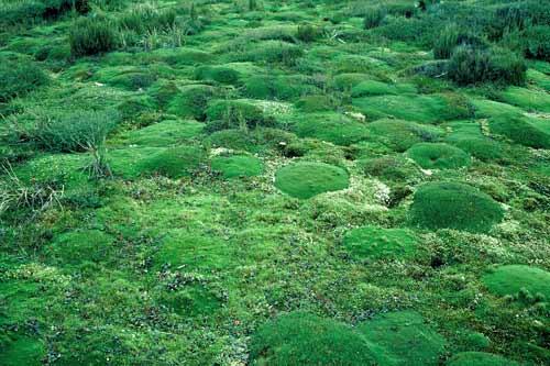 Waituna wetlands