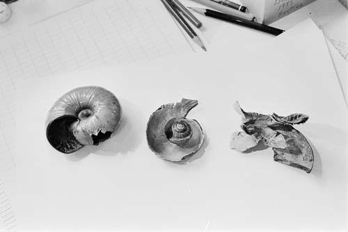 Damaged snail shells