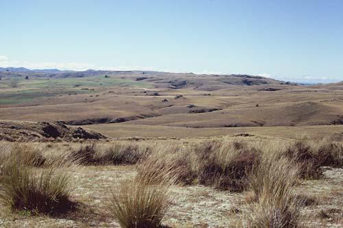 Otago tussock landscape