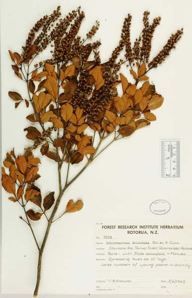 Tōwai leaves and flowers