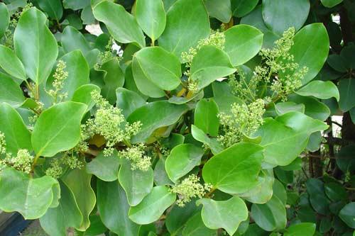 Broadleaf foliage and flowers