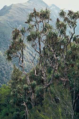 Mountain neinei