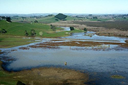 Whangamarino wetland