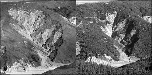 Tree planting and erosion