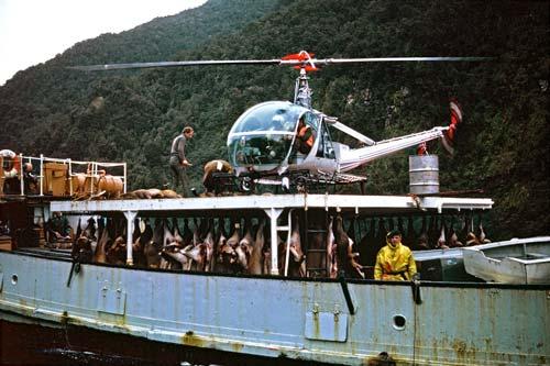 Deer control, Fiordland