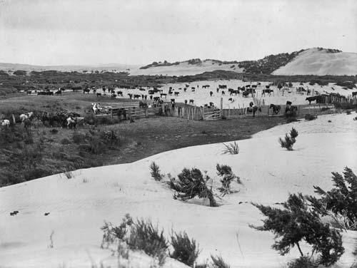 Farmland, Houhora