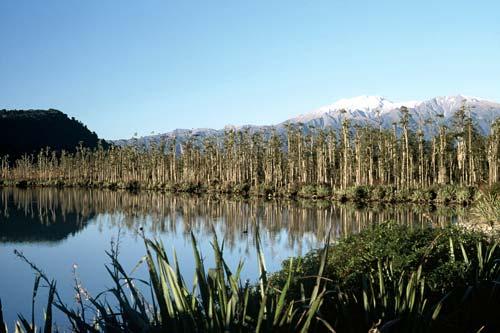 Swamp forest, Lake Wahapo