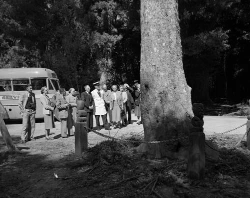 Wishing tree, Te Ara-o-Hinehopu