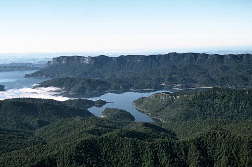 Native vegetation, Lake Waikaremoana