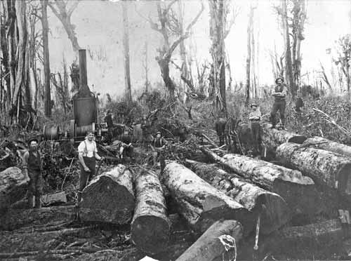 Polish timber-workers, Inglewood
