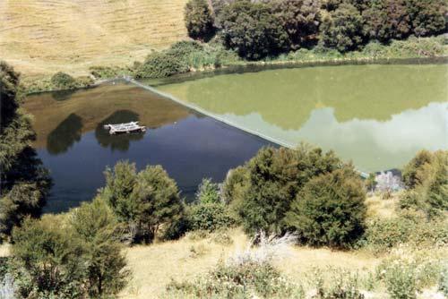 Plankton bloom in Lake Ōrākei