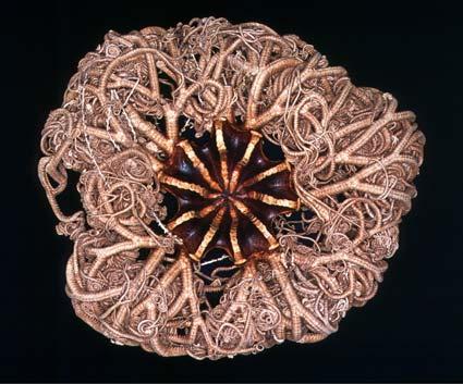 Deep-sea basket star