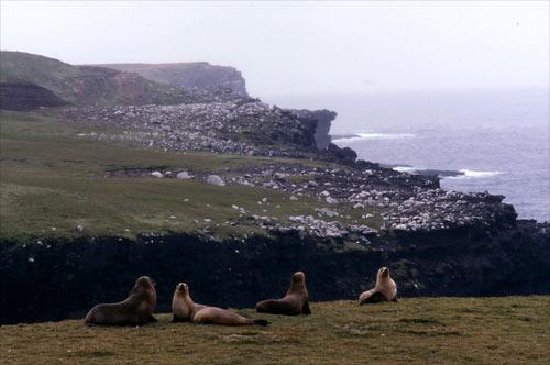 Sea lion hideout