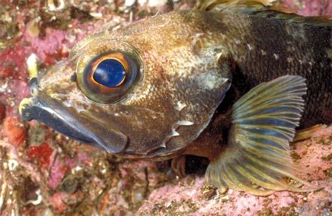 Jock Stewart fish