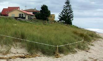 Re-established dunes
