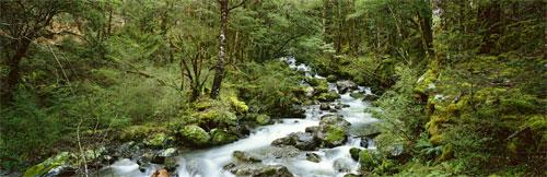 Bush streams