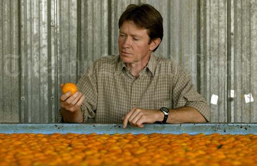 Kerikeri's citrus fruit industry