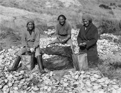 Shelling toheroa