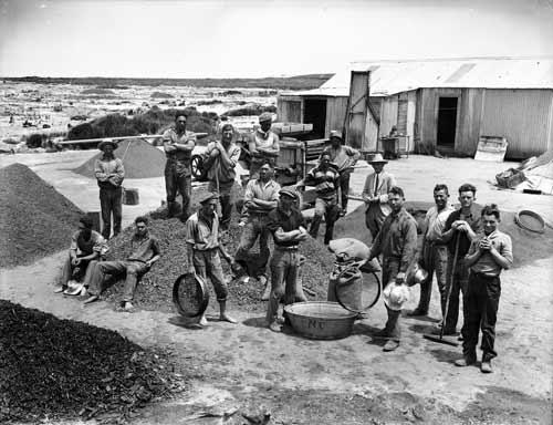 Dalmatians join Māori washing gum