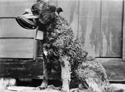 Lassie the bird dog