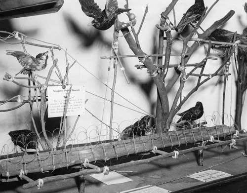 Bird traps
